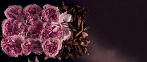 vegetal-rose-oud